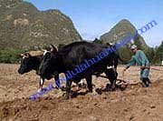 Pululahua_Ecological_Farming