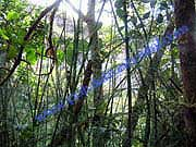 Pululahua_Cloud_Forest